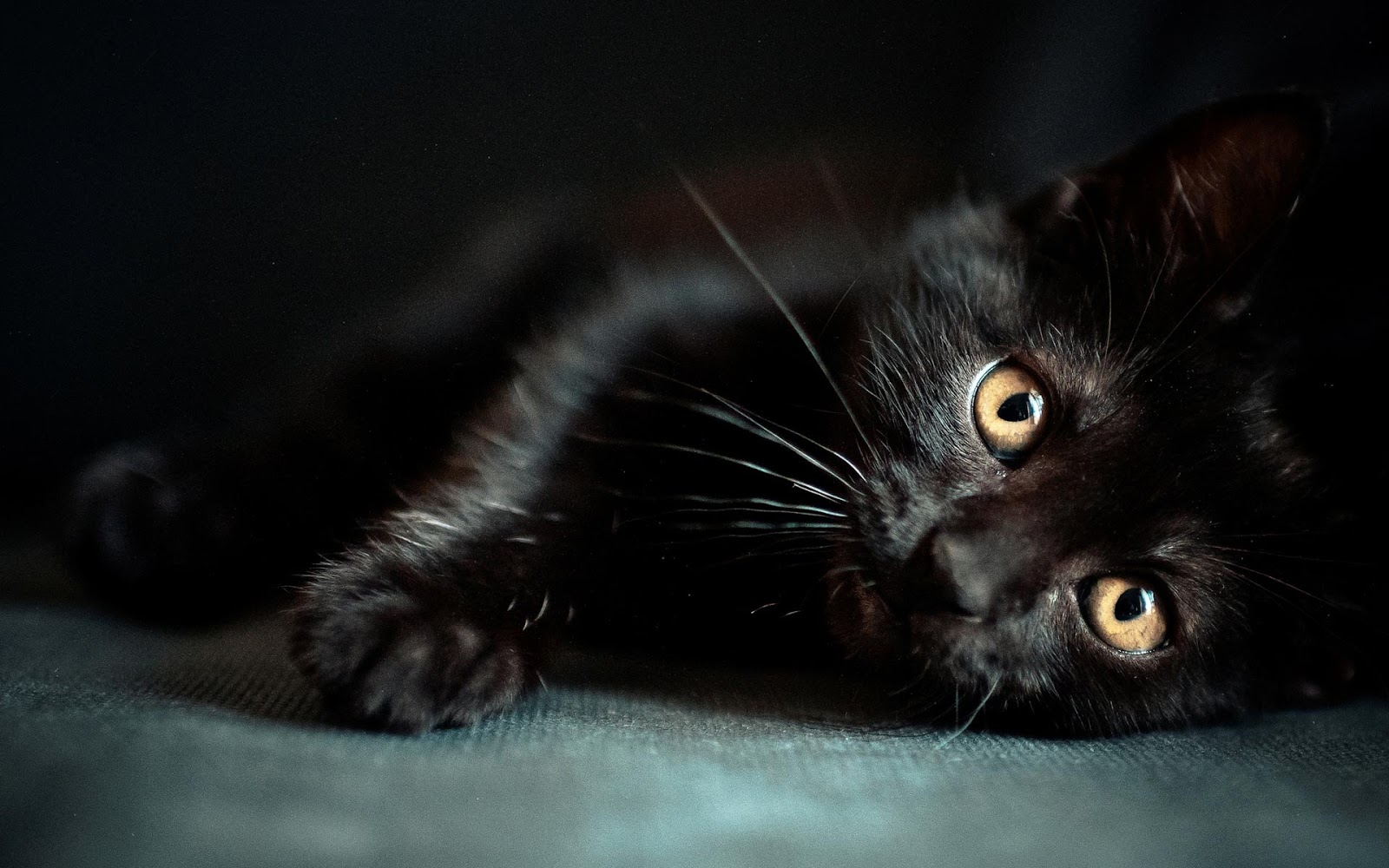 Black-Cat-Desktop