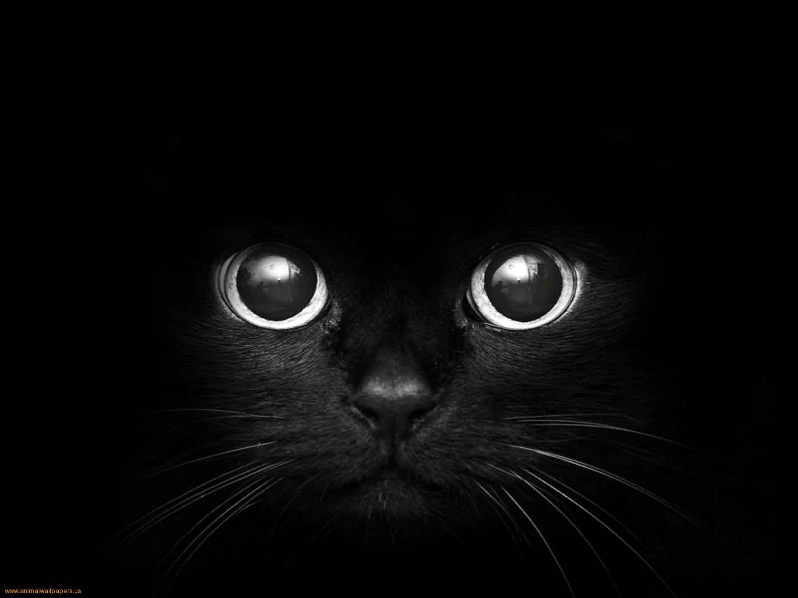 Papel de parede gato preto